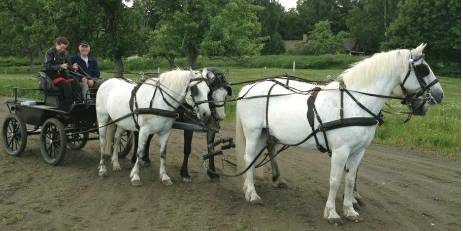 Körlektioner häst