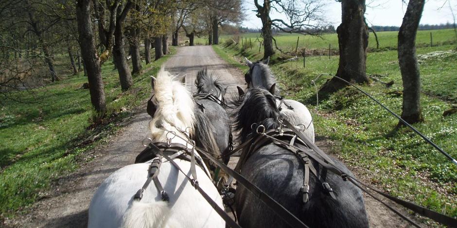 Lär dig köra häst!